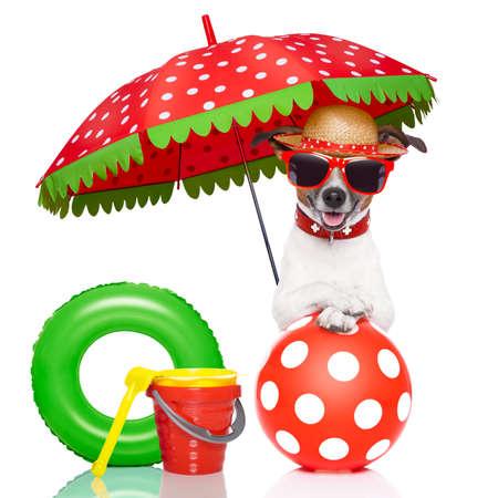 Foto de dog under umbrella with red sunglasses and a nice colorful hat - Imagen libre de derechos