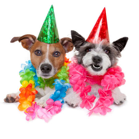Photo for two funny birthday dogs celebrating close together as a couple - Royalty Free Image