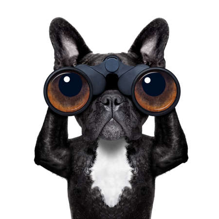 Photo pour binoculars dog searching, looking and observing with care - image libre de droit