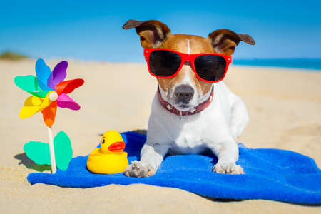 Foto de dog plays with sunglasses at the beach on summer vacation holidays - Imagen libre de derechos