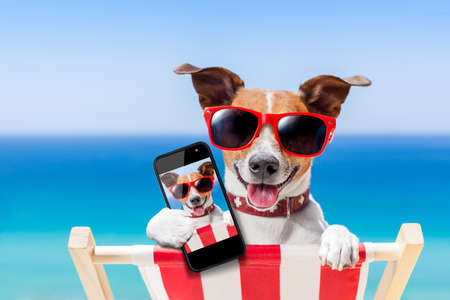 Foto de dog taking a selfie in summer holidays - Imagen libre de derechos