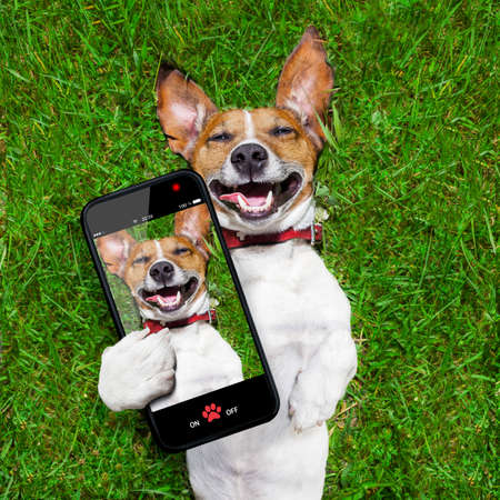 Foto de super funny face dog lying on back on green grass and laughing out loud taking a selfie - Imagen libre de derechos