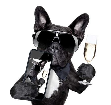 Photo for selfie of dog toasting for you in a cool pose - Royalty Free Image