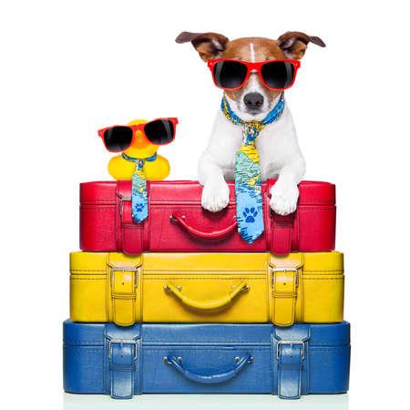 Foto de dog traveling with yellow plastic duck on top of luggage stack - Imagen libre de derechos