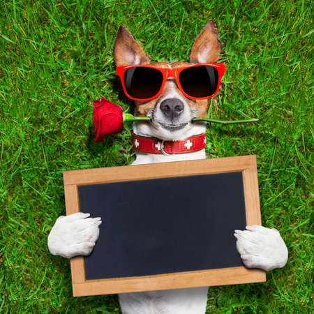 Foto de dog with a red rose in his mouth with an blank and empty blackboard or placard - Imagen libre de derechos