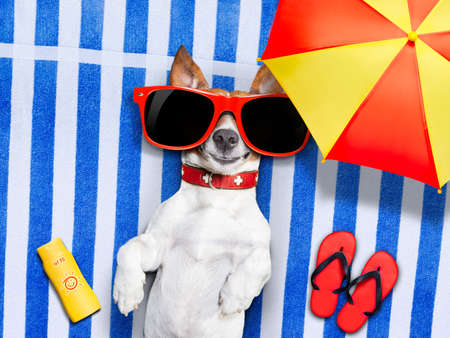 Foto de dog lying on fancy towel under the umbrella and with red sunglasses on sun tanning - Imagen libre de derechos