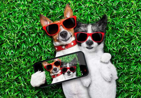 Photo pour couple of dogs in love very close together lying on grass taking a selfie - image libre de droit