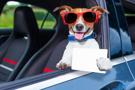Foto de dog leaning out the car window showing a blank and empty drivers license - Imagen libre de derechos