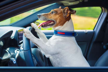 Foto de dog driving a steering wheel in a racing car - Imagen libre de derechos