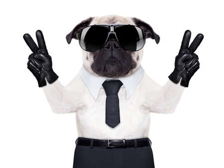 Photo for pug dog looking so fancy with victory or peace fingers, wearing cool  black sunglasses - Royalty Free Image