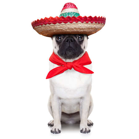 Foto de mexican dog with big sombrero hat and red tie - Imagen libre de derechos