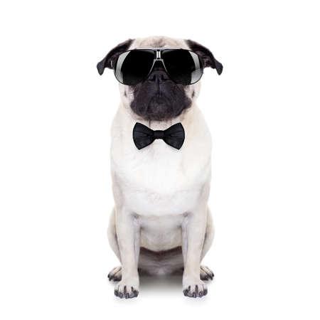 Foto de pug dog looking so cool with fancy sunglasses and a black small tie - Imagen libre de derechos