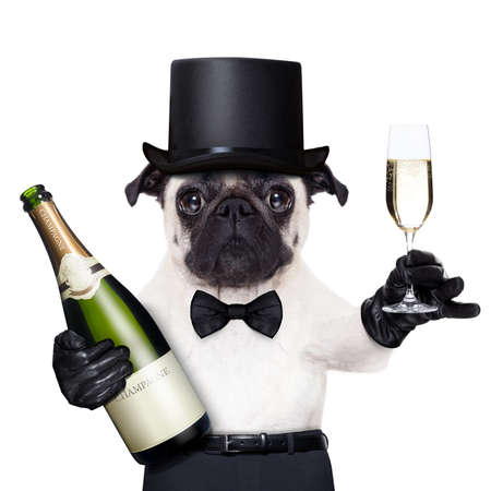 Photo for pug with  a champagne glass  and a bottle on the other side toasting for new years eve - Royalty Free Image