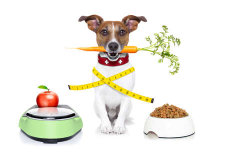 healthy dog on scale with carrot and measuring tape around waist isolated on white background