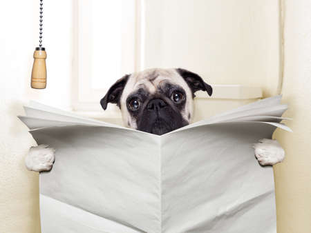 Foto de pug dog sitting on toilet and reading magazine having a break - Imagen libre de derechos