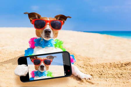 Foto de dog at the beach with a flower chain at the ocean shore wearing sunglasses taking a selfie - Imagen libre de derechos