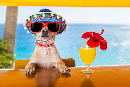 Foto de funny cool chihuahua dog drinking cocktails at the bar in a  beach club party with ocean view - Imagen libre de derechos