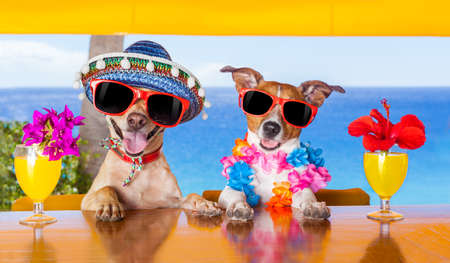 Photo for two funny dogs drinking cocktails at the bar in a  beach club party with ocean view - Royalty Free Image