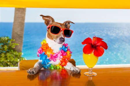Photo pour funny cool dog drinking cocktails at the bar in a  beach club party with ocean view - image libre de droit