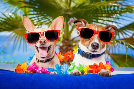 Photo pour couple of dogs on summer vacation at the beach under a palm tree - image libre de droit