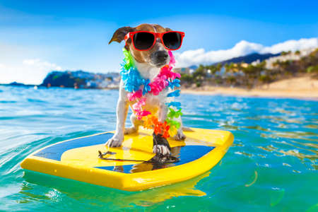 Photo pour dog surfing on a surfboard wearing a flower chain and sunglasses, at the ocean shore - image libre de droit