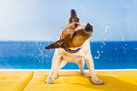 Photo for cute small dog shaking at the beach with closed eyes - Royalty Free Image