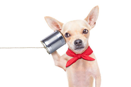 Photo for chihuahua dog talking on the phone surprised, isolated on white background - Royalty Free Image