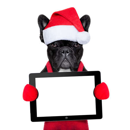 Santa claus christmas dog wearing a hat holding a touchpad or tablet pc , isolated on white background
