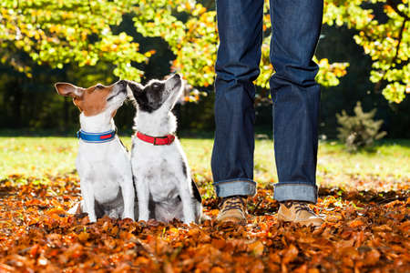 Photo for two happy dogs with owner sitting on grass in the park, looking up - Royalty Free Image