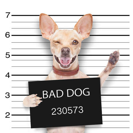 Photo for mugshot dog holding a black banner or placard, and waving his paws and blinking eye - Royalty Free Image