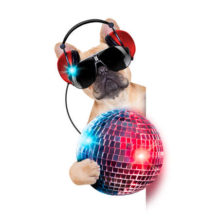 Photo for dj bulldog dog with headphones listening to music holding a disco ball, besides a white banner or placard , isolated on white background - Royalty Free Image