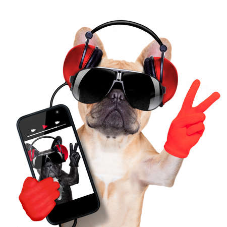 Foto de fawn french bulldog listening to a music player , with peace or victory fingers, isolated on white background - Imagen libre de derechos