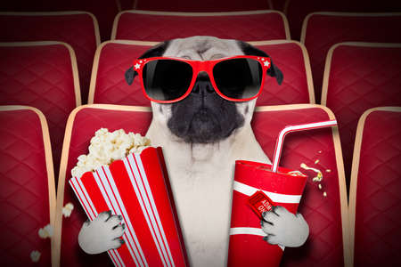 Photo for dog watching a movie in a cinema theater, with soda and popcorn wearing glasses - Royalty Free Image