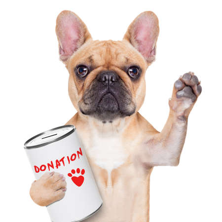 Foto de french bulldog dog with a donation can , collecting money for  charity, isolated on white background - Imagen libre de derechos