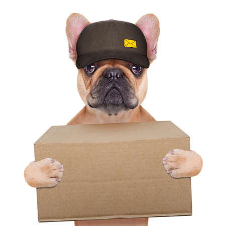 Foto de postman  french bulldog holding a shipping box , isolated on white background - Imagen libre de derechos