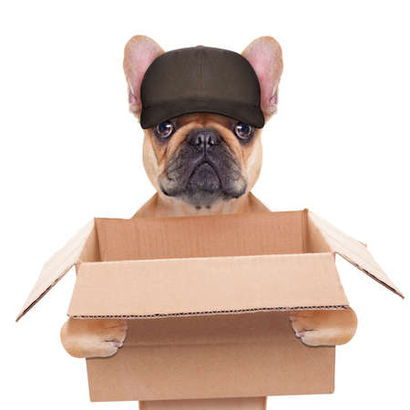 Foto per french bulldog holding a moving box, helping out for a relocation, isolated on white background - Immagine Royalty Free