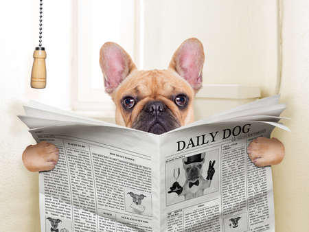 Foto de fawn french bulldog dog sitting on toilet and reading magazine - Imagen libre de derechos