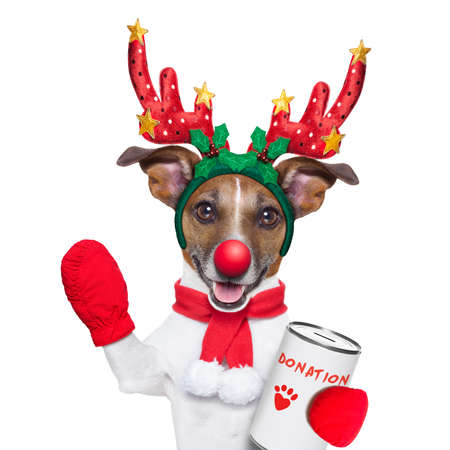 reindeer dog with a donation can , collecting money for  charity, as a winter edition , isolated on white background