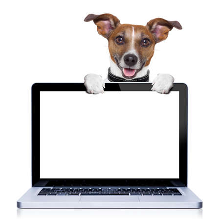 Foto de jack russell terrier dog  behind a pc computer screen, isolated on white background - Imagen libre de derechos
