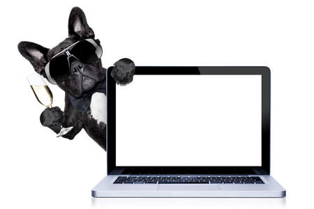 Foto de french bulldog dog ready to toast for new years eve, behind a laptop pc computer, isolated on white background - Imagen libre de derechos