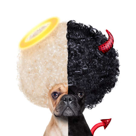 Foto de Devil and Angel fawn french bulldog dogs half face black and white ,deciding between right and wrong , good or bad, isolated on white background - Imagen libre de derechos