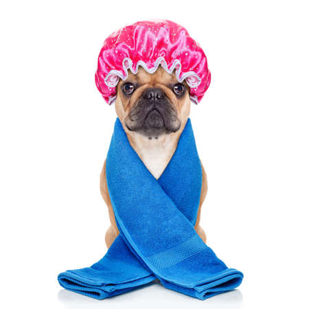 french bulldog dog ready to have a bath or a shower wearing a bathing cap and towel, isolated on white background