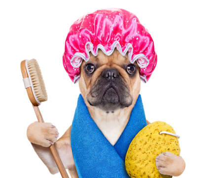 Photo pour french bulldog dog having a spa or wellness treatment with shower cap ,isolated on white background - image libre de droit