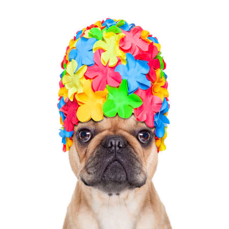 french bulldog dog wearing a bathing or swimming cap ready to enjoy the summer vacation holidays, isolated on white background