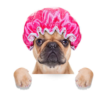 Photo for french bulldog dog ready to have a bath or a shower wearing a bathing cap, isolated on white background - Royalty Free Image