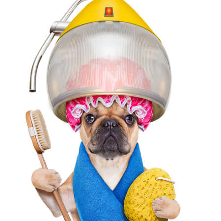 Photo pour french bulldog dog  under the hood dryer with sponge, shower cap, and brush, ready for a makeover , isolated on white background - image libre de droit
