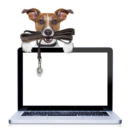 jack russell terrier dog waiting to go for a walk with owner, leather leash in mouth, behind pc computer screen , isolated on white background