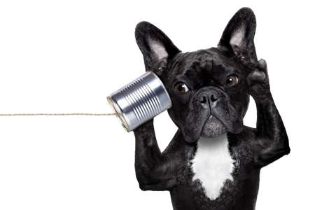 Photo for french bulldog dog listening or talking on the can telephone, isolated on white background - Royalty Free Image