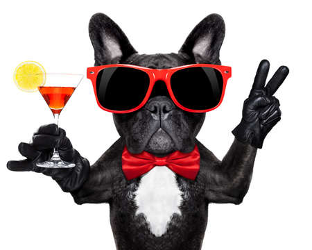 Photo for french bulldog dog holding martini cocktail glass ready to have fun and party, isolated on white background# - Royalty Free Image
