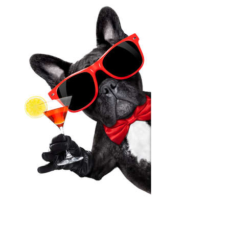 Photo for french bulldog dog holding martini cocktail glass ready to have fun and party,behind a white blank banner or placard, isolated on white background - Royalty Free Image